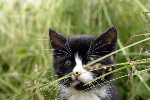 coccolare i gatti